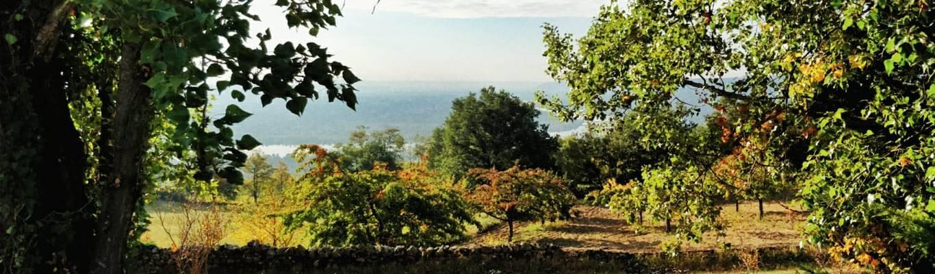 Vue sur la vallée du Rhône